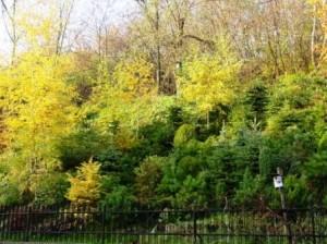 Kopiec jesienią